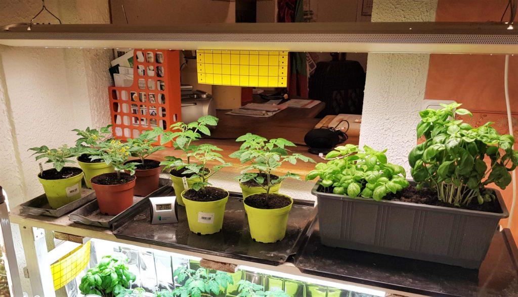 Så här enkelt är det att välja rätt växtbelysning Skabarafixa
